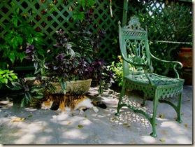 cat1hdr.jpg