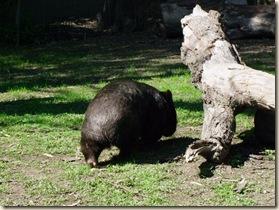 c 36 wombat_1 (3)